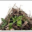 Hulladékudvar nyílik a zöld hulladék hasznosítása érdekében