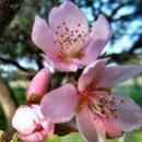 Álláshirdetés- Barack-Virág Kft