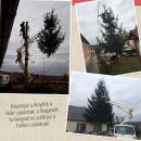 Fenyőfa felajánlás